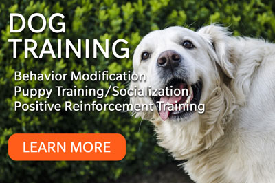 Humane Society Dog Training