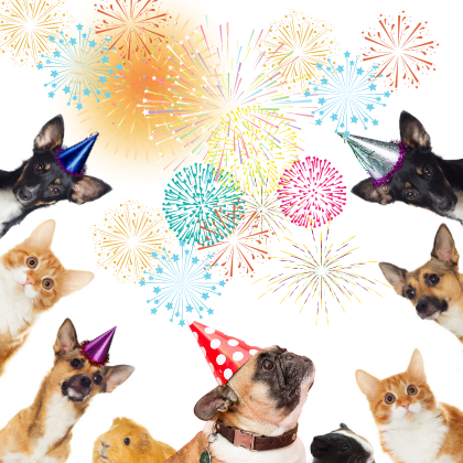 your pet and fireworks